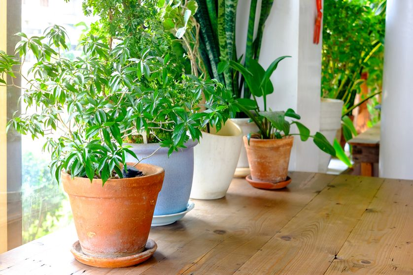 Natural Ways to Have Clean Indoor Air